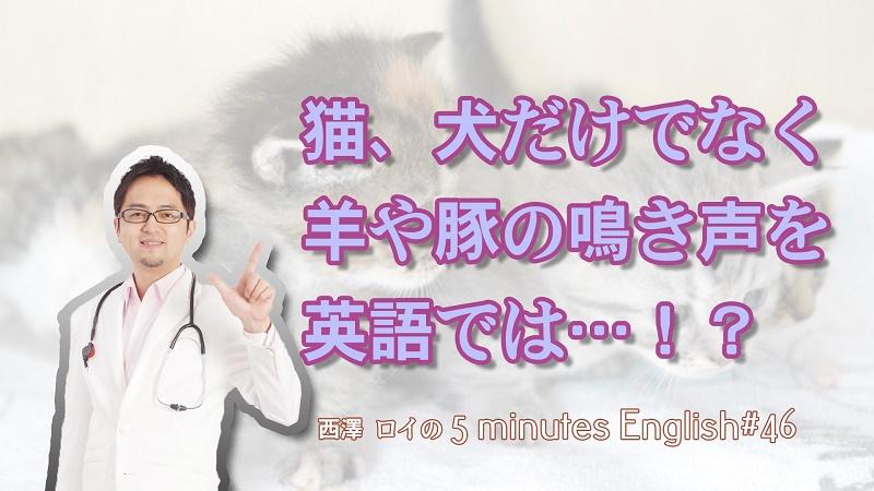 猫、犬、羊、豚の鳴き声を英語では…?【#46】